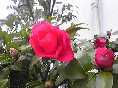 Image8359s1.jpg