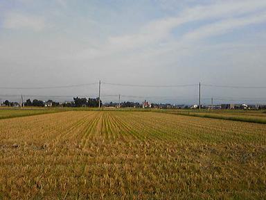 blog-photo-1221723085inekari1.jpg
