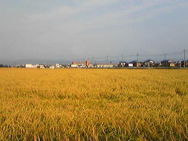 blog-photo-1221723085inekari2.jpg