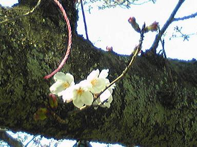 blog-photo-1238829380s3.jpg