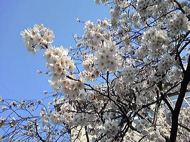 blog-photo-1239085043h4.jpg