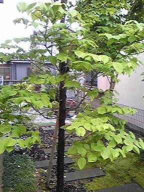 blog-photo-1242446820h1.jpg