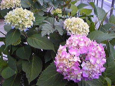 blog-photo-1243755434a1.jpg