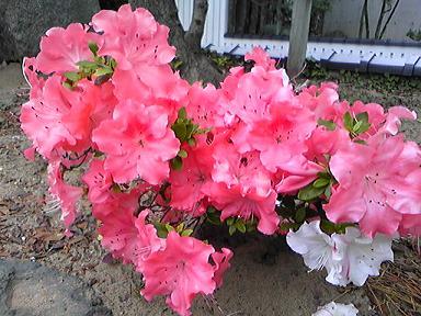 blog-photo-1243755434a3.jpg