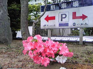 blog-photo-1243755434a4.jpg