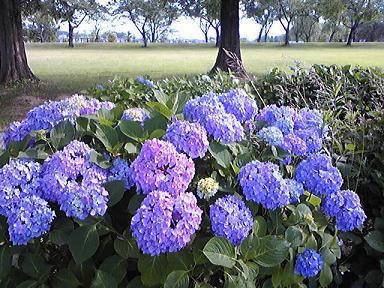 blog-photo-1245396293k5.jpg
