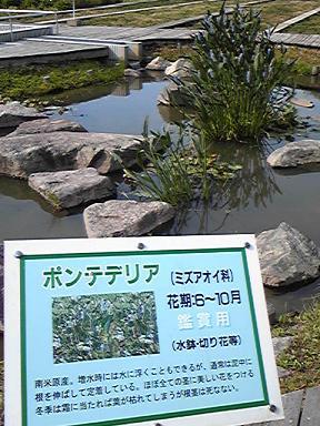 blog-photo-1245462047k2.jpg