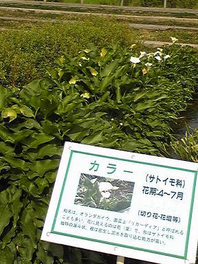 blog-photo-1245462047k3.jpg