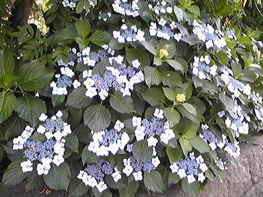 blog-photo-1246173403a5.jpg