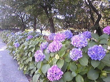 blog-photo-1246173403a6.jpg