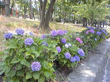 blog-photo-1246173448a7.jpg