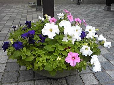 blog-photo-1249432406n2.jpg