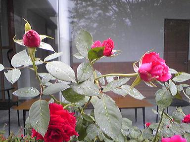 blog-photo-1252032248g4.jpg