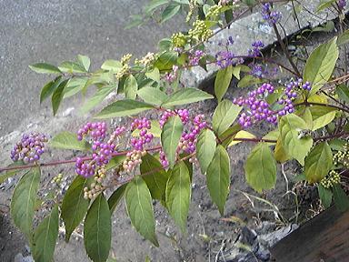 blog-photo-1253753040a1.jpg
