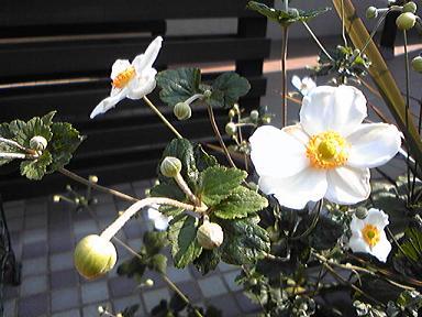 blog-photo-1254387557g1.jpg