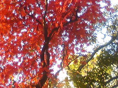 blog-photo-1259131962k3.jpg