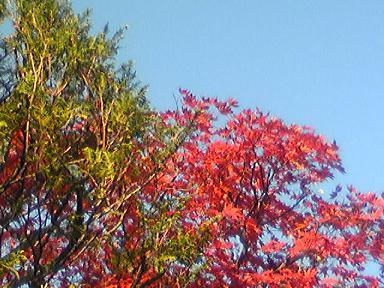 blog-photo-1259131962k4.jpg