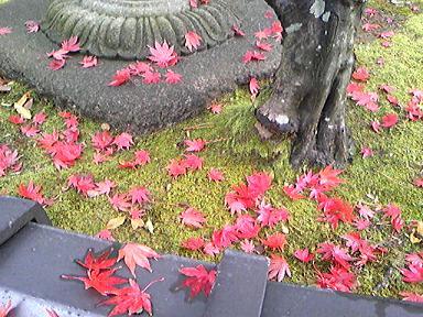 blog-photo-1259374344k9.jpg