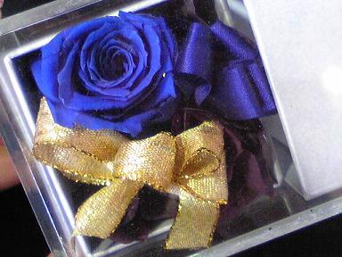 blog-photo-1263350605a13.jpg