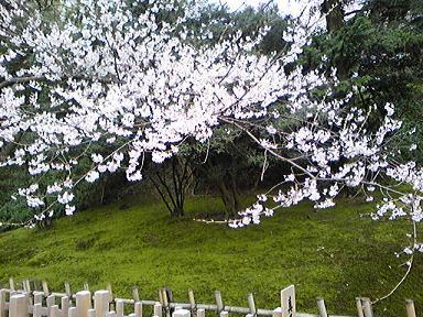 blog-photo-1270702134s11.jpg