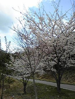 blog-photo-1271466713n8.jpg