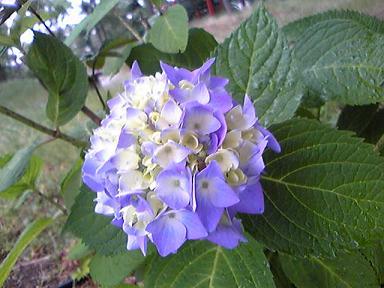 blog-photo-1276420110a1.jpg