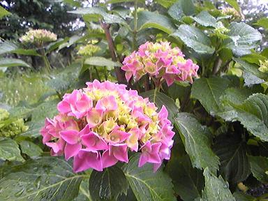 blog-photo-1276420110a2.jpg