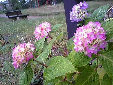 blog-photo-1276420110a3.jpg