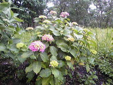 blog-photo-1276420225a4.jpg