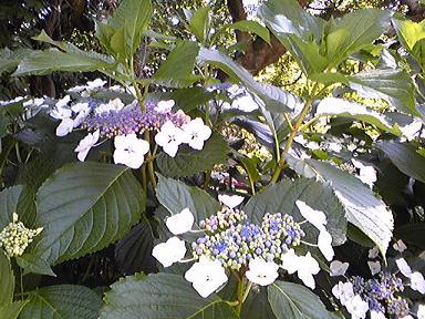 blog-photo-1277436015a1.jpg