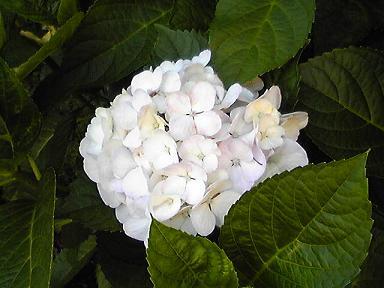 blog-photo-1277436015a2.jpg