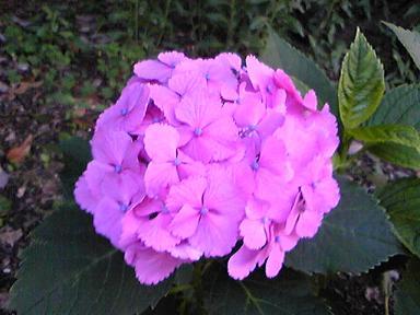 blog-photo-1277965944a1.jpg