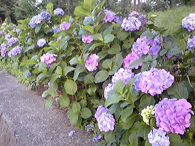 blog-photo-1277966048a2.jpg