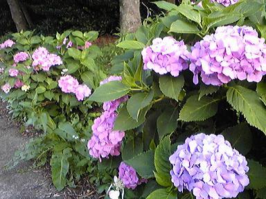 blog-photo-1277966048a3.jpg