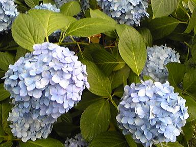 blog-photo-1279088048s1.jpg