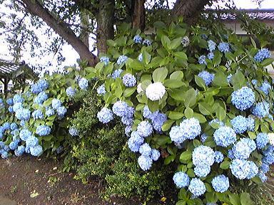 blog-photo-1279088048sd4.jpg